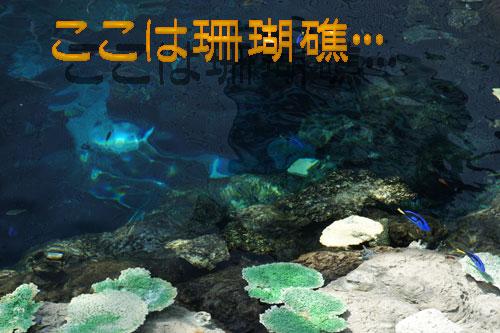 珊瑚礁.jpg
