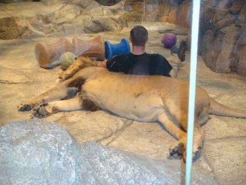 MGMグランドのライオンその2.jpeg